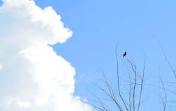 Ptak na nieboszczyk gałąź Obrazy Royalty Free