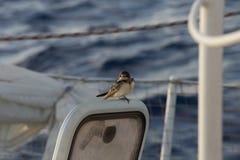 Ptak na łodzi Obrazy Stock