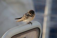 Ptak na łodzi Obraz Royalty Free