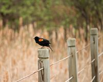 Ptak na płotowej poczcie obrazy stock