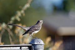 Ptak na płotowej poczta Obraz Stock