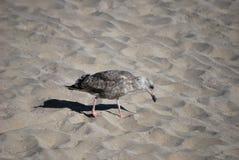 Ptak na plaży Zdjęcia Stock