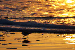 Ptak na plaży Obrazy Stock