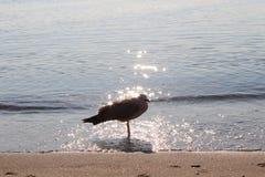 Ptak na plaży Zdjęcie Stock