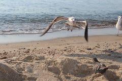 Ptak na plaży Fotografia Royalty Free
