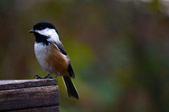 Ptak na platformie Fotografia Royalty Free