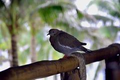 Ptak na poręczu fotografia royalty free