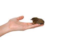 Ptak na ręce fotografia royalty free