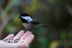 Ptak na ręce Zdjęcie Stock