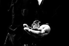 Ptak na ręce Zdjęcie Royalty Free