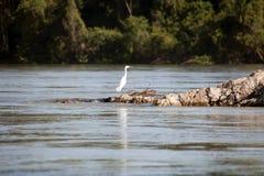 Ptak na rockowym wychodzie w zalewającym lesie w ramsar bagnach w porze suchej zdjęcie royalty free