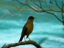 Ptak na rzece fotografia stock