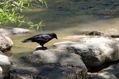 Ptak na skałach Obrazy Royalty Free