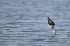 Ptak na wodnym Południowa Afryka obraz stock