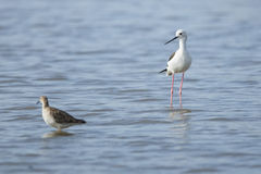 Ptak na wodnym Południowa Afryka fotografia royalty free