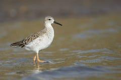 Ptak na wodnym Południowa Afryka zdjęcia stock