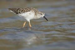 Ptak na wodnym Południowa Afryka obrazy stock