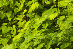 Ptak na zielonych liściach Obrazy Stock