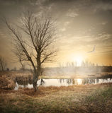 Ptak nad jesieni rzeką obraz stock