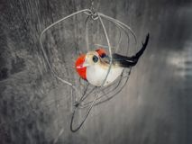 Ptak nigdy chce klatkę zdjęcia stock