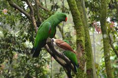 Ptak Ochraniający zdjęcie royalty free