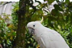 Ptak Ochraniający zdjęcia royalty free