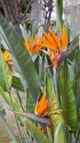 Ptak od raju Zdjęcia Royalty Free