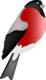 Ptak odizolowywają na białym tle A Royalty Ilustracja