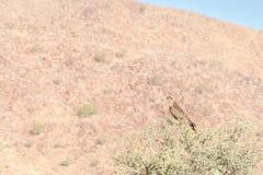 Ptak ono modli się Fotografia Royalty Free