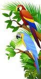 ptak papuga Obraz Stock