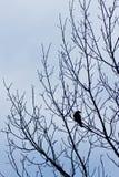 ptak pojedynczy Zdjęcie Stock