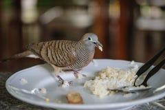 Ptak przynosi jedzenie plecy dom Obrazy Stock