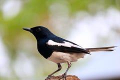 ptak obrazy stock