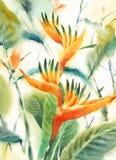 Ptak raj akwareli kwiatów Ilustracyjna ręka Malująca ilustracji