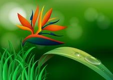 Ptak raj w lesie ilustracja wektor