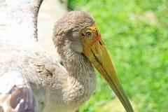 Ptak, rezerwowi zwierzęta Zdjęcie Stock