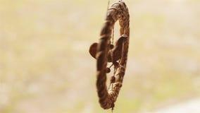 Ptak robić słomiany obwieszenie jako pamiątka zbiory wideo