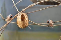 Ptak rodzina obraz stock