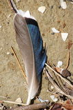 ptak s piórko zdjęcie stock