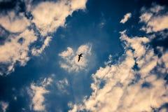 ptak sam Zdjęcie Stock