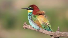 Ptak siedzi na gałąź z pięknymi kolorowymi piórkami zbiory