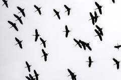 Ptak sylwetka w niebie Afryka Obraz Royalty Free