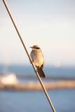 ptak trochę Zdjęcia Royalty Free