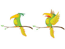 ptak tropikalny Obraz Stock