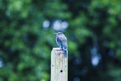 Ptak trzy Zdjęcia Royalty Free