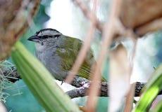 ptak umieszczał zdjęcia stock