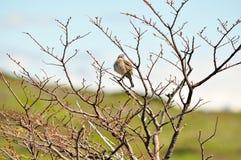 Ptak umieszczający na suchym drzewie obrazy royalty free