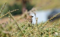 Ptak wśród krzak gałąź zdjęcie royalty free