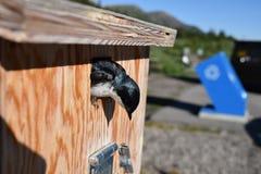Ptak w birdhouse pobliskim przetwarza koszu Fotografia Stock