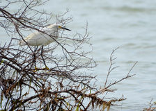 Ptak w Bush Zdjęcie Stock